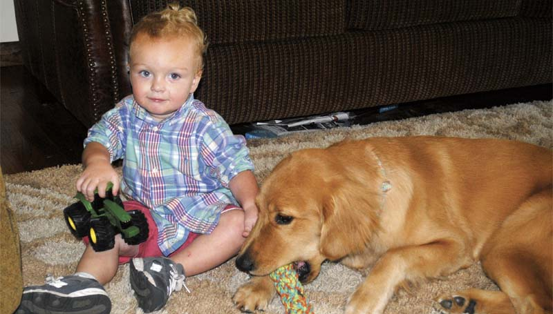 DAILY LEADER / JUSTIN VICORY / Blaze Bozeman, 20 months old, sits next to his new buddy, Erving, a golden retriever that is specially trained to alert Blaze's parents if the young boy is about to have a seizure or respiratory problems.