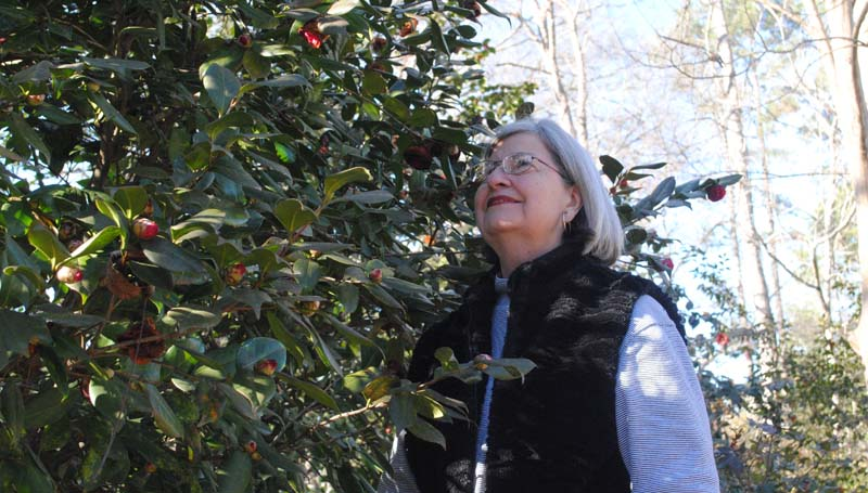 THE DAILY LEADER / JUSTIN VICORY / An unusually cold stretch has delayed the bloom of area camellias. Still, Ward Four Alderman Shirley Estes finds reason for hope among the buds of her plants. Estes in one of many local camellia enthusiasts that participate in the annual camellia show in Brookhaven each year.