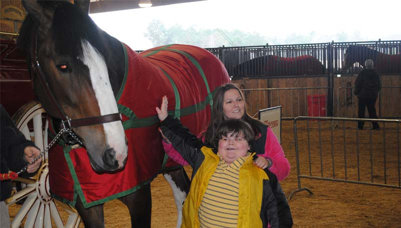 THE DAILY LEADER / JUSTIN VICORY / One of the 10 Clydesdales in town Monday at the Lincoln Civic Center arena stall barn poses for a picture with Taylor and Adrian Williams. Lincoln Civic Center director Quinn Jordan said about 1,000 people turned out for Monday afternoon's event.