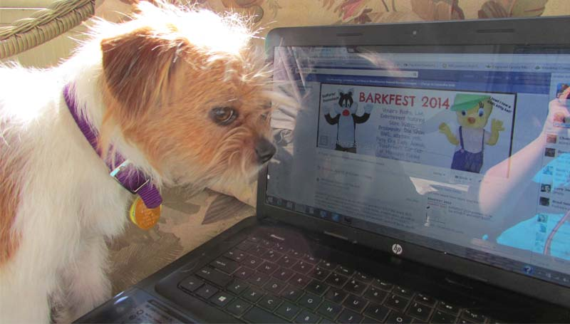 PHOTO SUBMITTED / Adoptable Brookhaven Animal Rescue League dog, Taffy, looks at the Barkfest Facebook site to check out the activities planned for the April 12 event.