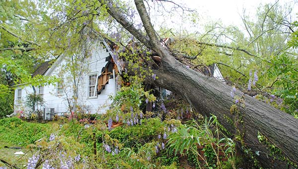 THE DAILY LEADER / JUSTIN VICORY / Strong winds uprooted a massive tree that smashed into a house on Cassidy Street Tuesday afternoon. No one was home during the incident.